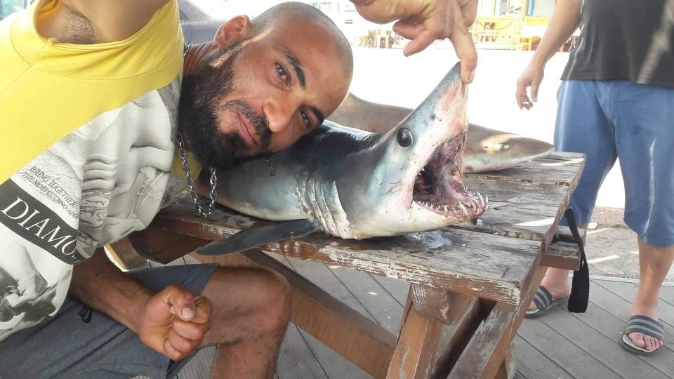 Mağusa'da köpek balığı galerisi resim 3