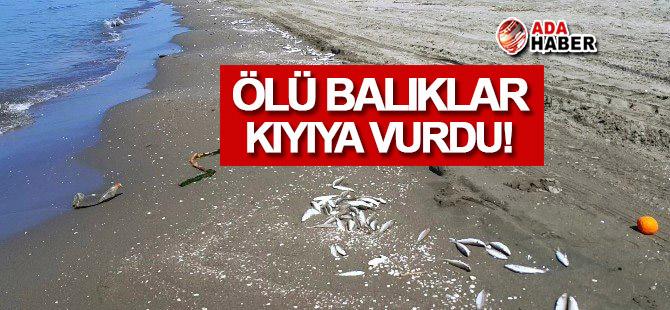 Mağusa'da ölü balıklar kıyıya vurdu!