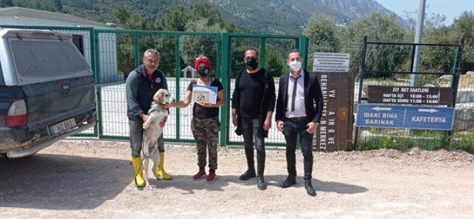 Girne Belediyesi sokak hayvanları için rehabilitasyon ve sahiplendirme çalışmalarını sürdürüyor