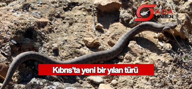 Kıbrıs'ta yeni bir yılan türü keşfedildi