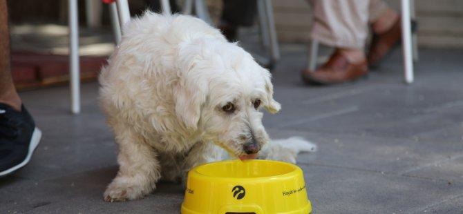 Sıcaklarda hayvanlar için su kabı