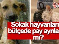 Sokak hayvanlarına bütçede pay ayrılacak mı?
