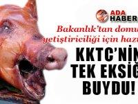 KKTC'de domuz yetiştiriciliği için hazırlık!