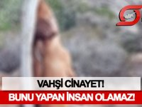 Yeni Erenköy'de vahşi cinayet!